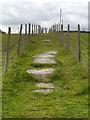 SJ9699 : The Path from Heyrod towards Ridge Hill by David Dixon