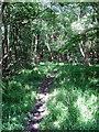 SP8230 : Footpath through Salden Wood by Philip Jeffrey