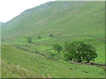 NY4116 : Boredale's first or last tall trees by Christine Johnstone