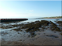 NU0052 : Rocky foreshore southwest of the Pier, Berwick-Upon-Tweed by Alexander P Kapp