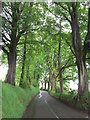 NS9999 : Beech lined road by Richard Webb