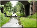 SJ9594 : Dog walking on the Trans Pennine Trail by Gerald England