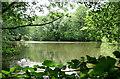 SU7532 : Pond beneath Lane Hanger by Hugh Chevallier