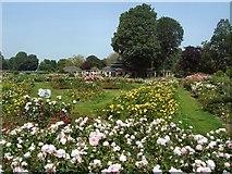 TQ3005 : Scented Rose Garden - Preston Park by Paul Gillett