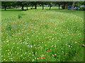 TQ2664 : Wildflower meadow in Manor Park by Marathon