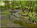 SD9801 : Castle Clough, Staly Brook by David Dixon