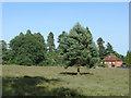SU9669 : Windsor Great Park by Alan Hunt