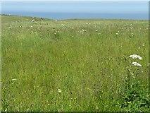 TA1974 : Cliff top meadow, RSPB Bempton Cliffs by Christine Johnstone