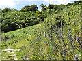 TQ2051 : North Downs Way, Betchworth Hills by Colin Smith