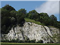 TQ2051 : Chalk Face, Betchworth Quarry by Colin Smith