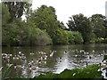 SU9747 : The Lake, Loseley Park by Colin Smith