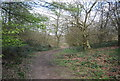 TR0748 : Stour Valley Walk, Marriage Wood by N Chadwick