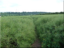 SO5628 : Part of the Herefordshire Trail south of King's Caple by Jeremy Bolwell