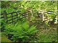 SX6970 : Path crossing stream, Holne Wood by Derek Harper