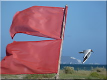 SZ1891 : Mudeford: flags and a gull fly in opposing directions by Chris Downer