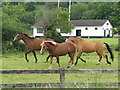 G8976 : Horses, Donegal by Willie Duffin