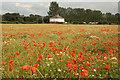 SK8769 : Swinethorpe meadow by Richard Croft