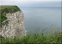 TA1974 : Bempton Cliffs by Pauline E