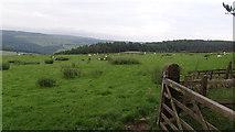 SK2468 : Fields on the hillside by Ian Paterson