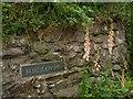 SX7652 : Foxgloves, Moreleigh by Derek Harper