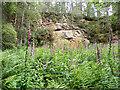 NJ1763 : Permian Sandstone in Rosebrae Quarry by Anne Burgess