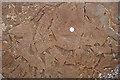 NJ1570 : Fossil Mud Curls by Anne Burgess