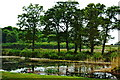 R3870 : Dromoland - Castle Grounds at South End of Pond by Joseph Mischyshyn
