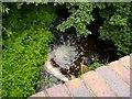 SO8577 : Stream leaving Hurcott Pool by Stephen Rogerson