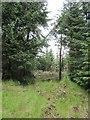 NT0896 : Windthrow, Blackhill Wood by Richard Webb