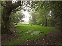 SX7352 : Field on Storridge Moor by Derek Harper