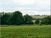 SU2991 : Maize crop, south of Fernham by Brian Robert Marshall