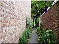 TQ3374 : North Dulwich:  Hollyhocks by Dr Neil Clifton