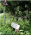SE3540 : Himalayan Balsam at the edge of the road by Christine Johnstone