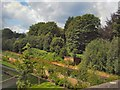 TQ5840 : Trees by track - Tunbridge Wells by Paul Gillett