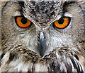 NT4936 : The eyes have it! by Walter Baxter