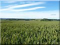 NZ0455 : Ripening wheat by Joan Sykes