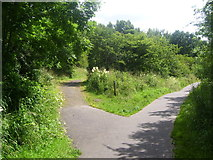 NS7357 : Park Pathways by Ross Watson