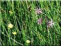 NM8903 : Summer flora by Patrick Mackie