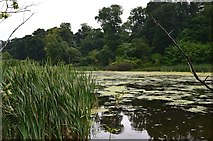 NT5682 : Balgone Loch by Jim Barton