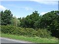 NZ2176 : Woodland, Milkhope by JThomas