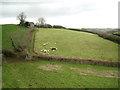 SX8554 : Sheep in a field below a barn by Robin Stott