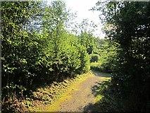 G8740 : Milltown Woods by Richard Webb