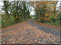 ST1787 : Dead leaves on the road to Gwern-y-domen near Caerphilly by Jaggery