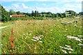 TF9716 : Wild Meadow by Ashley Dace