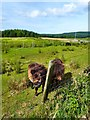 NR9821 : Shetland Ponies by Andy Farrington