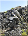 SX0991 : Slate folding (close up) by Bill Harrison