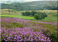 SK2494 : Bell heather and upland enclosures by Andrew Hill