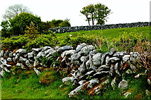 M2300 : The Burren - R480 - Stone Walls, Shrubs & Field near Poulnabrone Dolmen Area by Joseph Mischyshyn