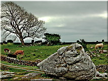 M2300 : The Burren - R480 - Stone, Road, Cattle & Tree near Poulnabrone Dolmen Site by Joseph Mischyshyn