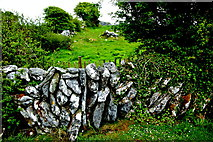 M2300 : The Burren - R480 - Stone Wall, Shrubbery, Field near Poulanabrone Dolment Site by Joseph Mischyshyn
